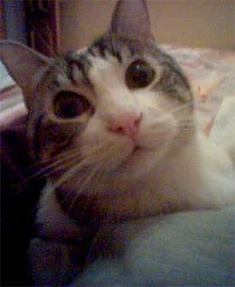 Mi Gato Siryu con el que probaremos la versión felina de Lucky Dog lottery