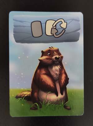 Roedores, carta de marmota